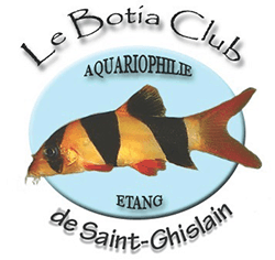 Botia Club